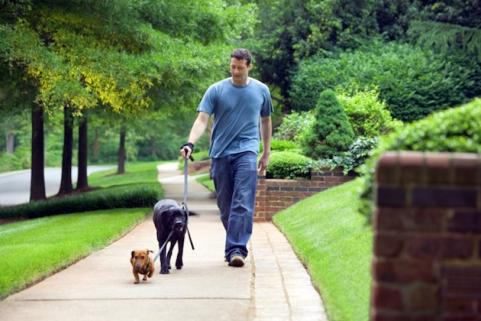 Man walking with dogs