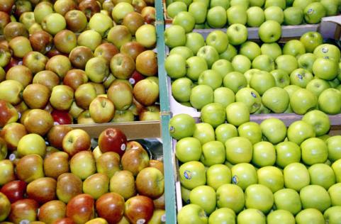 bins of red and green apples