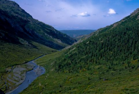 Savage River Canyon Trail Denali Alaska