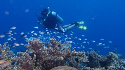 scuba diving in Borneo